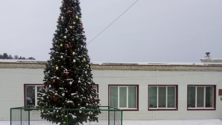 Глава тюменского поселка ответил на обвинения и объяснил, почему елка стоит под окнами его кабинета