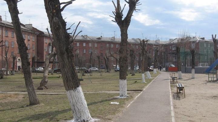 Мы их и не собираемся белить: чиновники ответили общественнику, показавшему вред от побелки деревьев