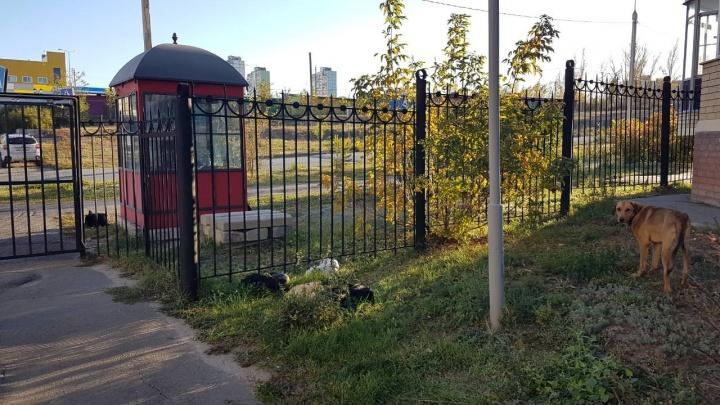 «Ходим с палками»: в Волгограде стая агрессивных собак терроризирует целый квартал