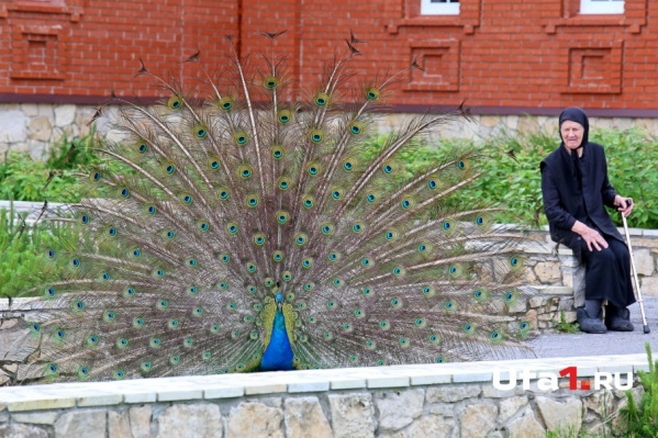 Жар-птицы радуют глаз обитателей общины