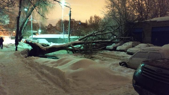 На Стара-Загоре дерево рухнуло на припаркованные автомобили