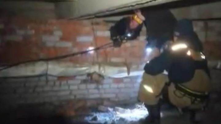 В Уфе со дна 20-метровой шахты достали кота. Операцию по спасению снимали на видео