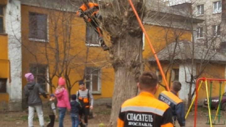 Умилительная история: в Ярославле спасатели залезли на дерево ради детского мяча