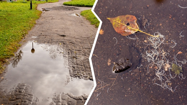 Выбрались на поверхность: в Ярославле детский парк заполонили кишащие белые черви