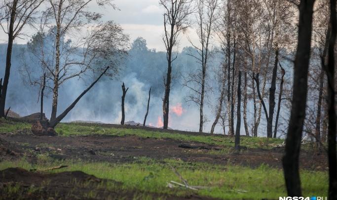 Зону контроля, где можно не тушить горящие леса, предложили уменьшить на 3 миллиона гектар