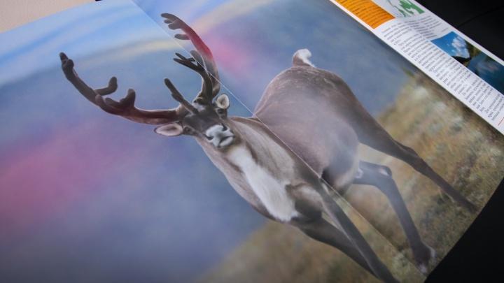Из Красной книги Прикамья ушли русская быстрянка и неопределенный шмель. Но появился северный олень