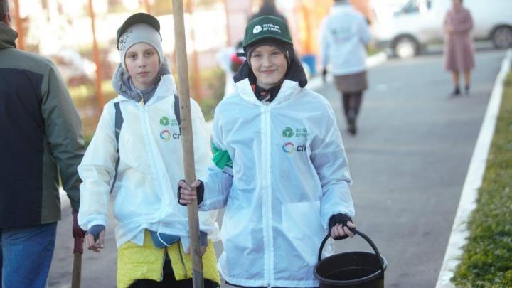 На территории школы в новом районе Красноярска высадили сирень и акацию