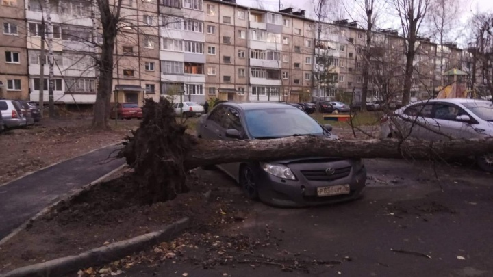 Ураган возвращается: на Ярославль снова обрушится лютый ветер