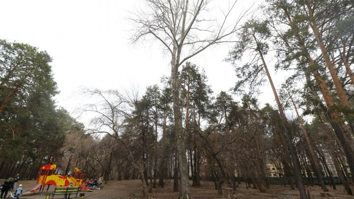 Антимонопольщики разрешили мэрии Екатеринбурга провести конкурс на вырубку деревьев в Зеленой Роще