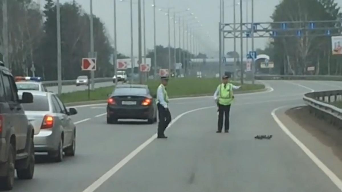 Ради утят сотрудники ГИБДД перекрыли дорогу