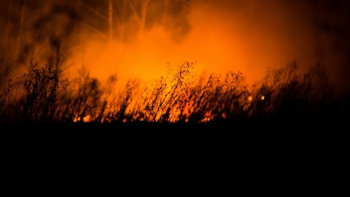 «Движется из Оренбургской области»: на тушение крупного лесного пожара задействовали вертолёт МЧС