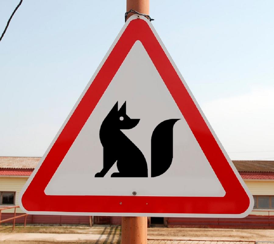 В Новосибирске по улицам бродит «дикий лис»