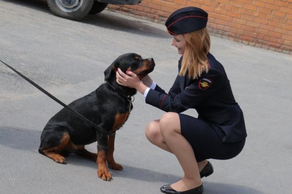 Новый сотрудник полиции бельгийская овчарка Зевс будет искать оружие и взрывчатые вещества