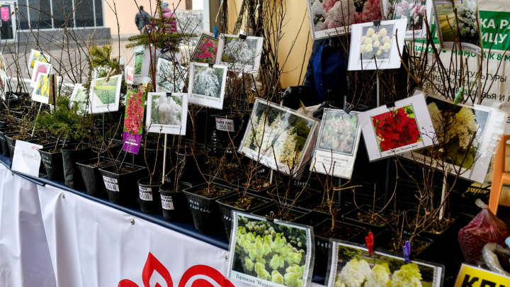 В Перми до конца года проведут 72 ярмарки товаров местныхпроизводителей