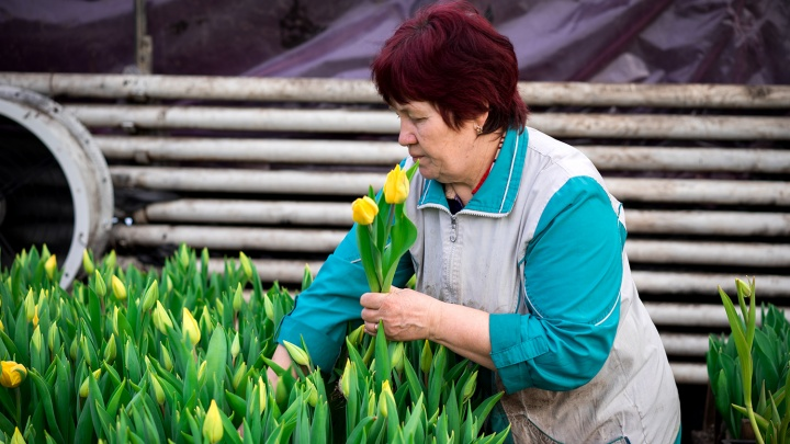 История одной профессии: омичка выращивает поле тюльпанов в феврале