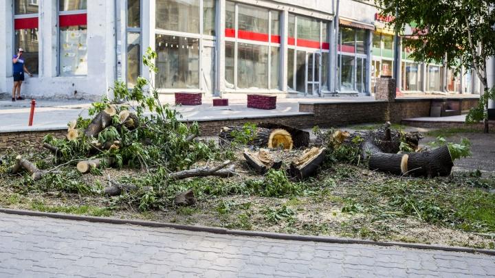 В Первомайском сквере начали пилить деревья