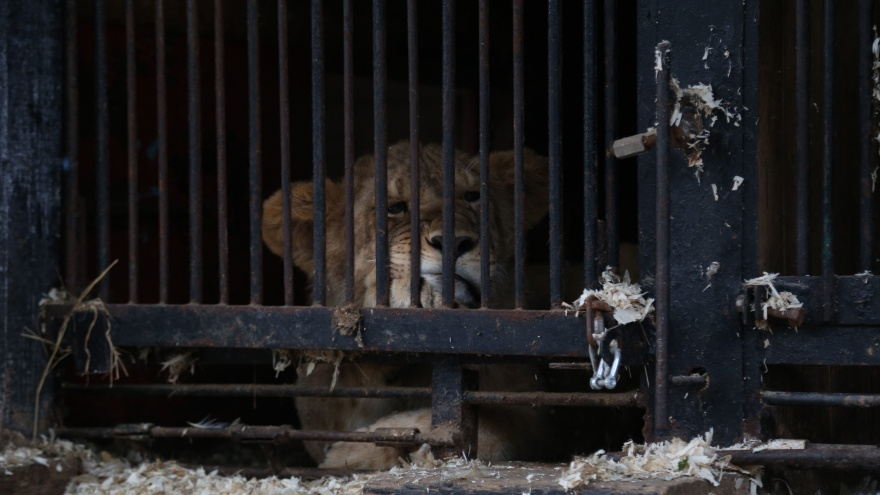 Хозяин зверинца в Уфе — о том, почему животные сидят в тесных клетках: оправдываться я не собираюсь