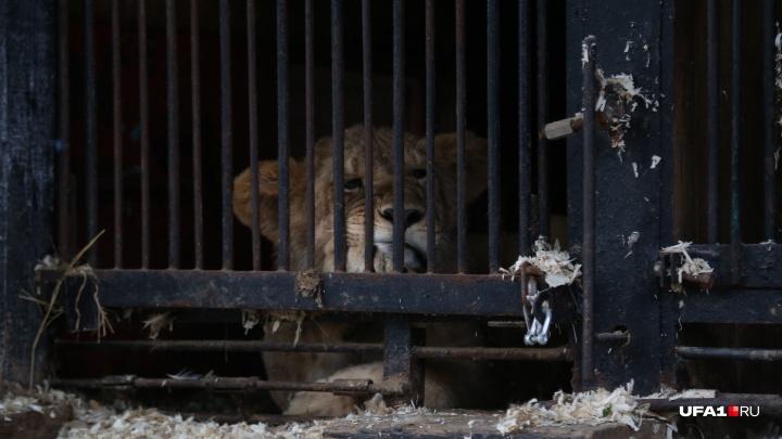 Хозяин зверинца в Уфе — о том, почему животные сидят в тесных клетках: «Оправдываться не собираюсь»