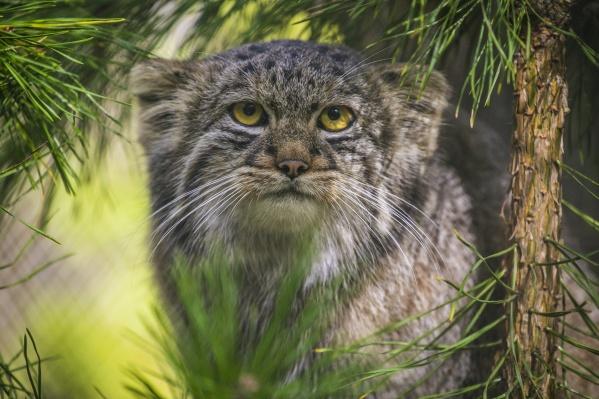 Новосибирский зоопарк объявил социальную акцию