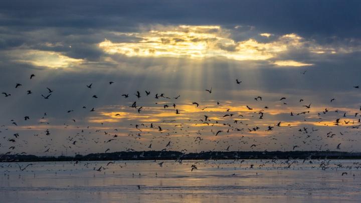 Зольные пруды, застенчивые чайки: отдыхаем на курортах омского золоотвала