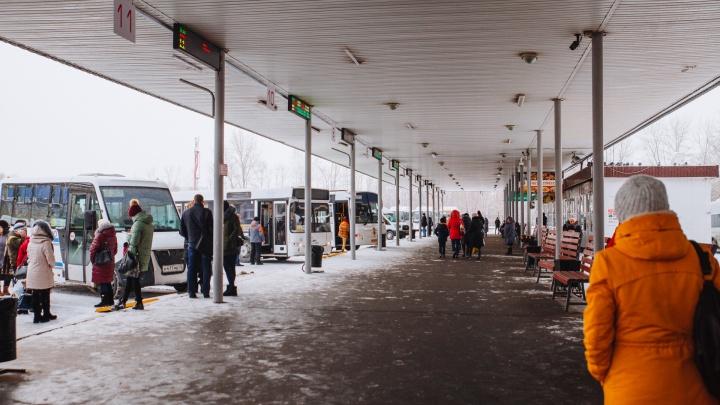 Не было куда присесть: на тюменский автовокзал завели дело за голубиный помет на скамейках