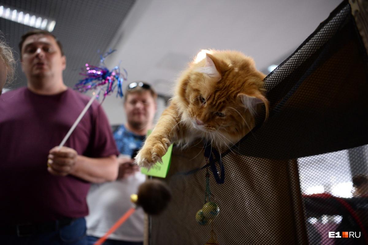 Чтобы котикам было не скучно, с ними играли