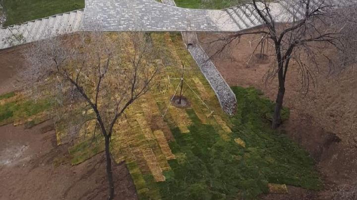 «Опять обвинят собак?»: газон в новом парке Волгограда превратился в выжженный «ковёр»