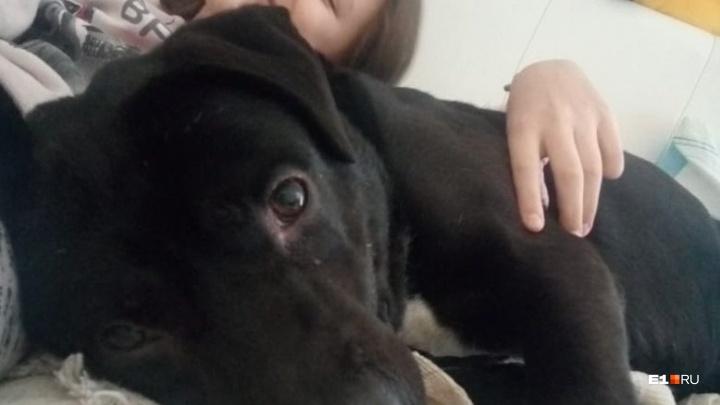 «Его выкинули»: мисс Екатеринбург оставит себе пса, которого нашла замерзающим на улице