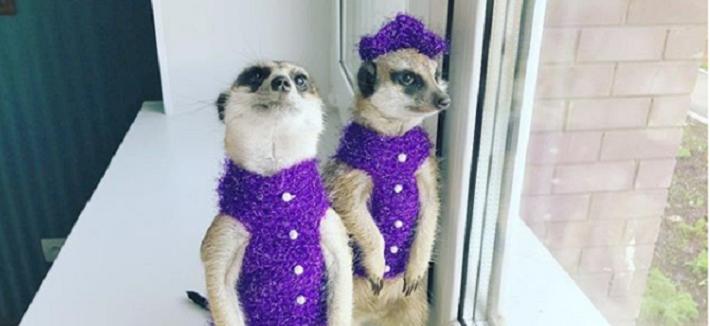 Маргоша и Гоша — пермские звёзды Instagram: ведут раскопки, едят сверчков и смотрят «Тимона и Пумбу»