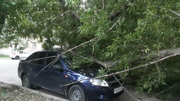 В Уфе упавшие деревья повредили две машины