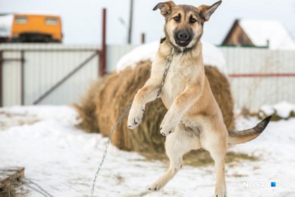 Большое количество собак живет в промышленной зоне города и на стоянках