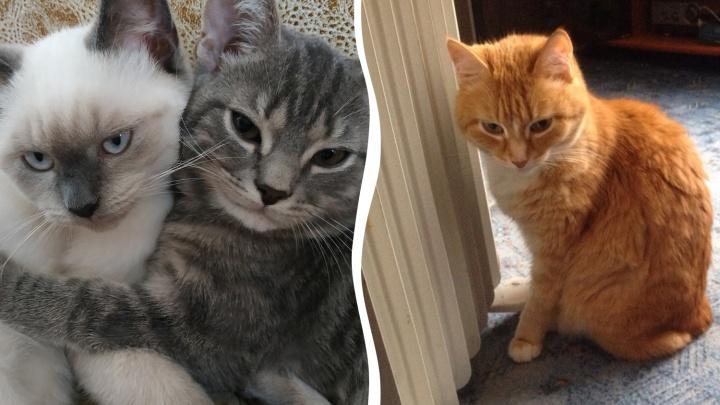 Шерсть шерстяная: смотрим фото замерзающих котиков в квартирах челябинцев