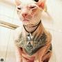 В соцсетях пишут, что пермяк «забил» татуировками своего кота. Это вообще законно?