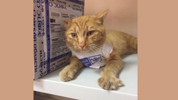 Рыжий кот вернулся на омскую почту и получил новую форму сотрудника