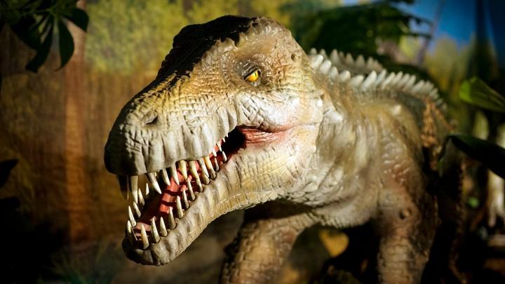 Парк омского периода: НГС сходил на новую выставку динозавров