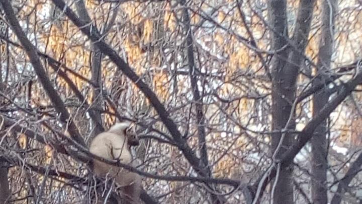 В уфимском дворе засняли лесного хищника