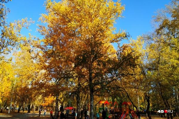 В этом году в Кургане осень не только непривычно теплая, но и удивительно яркая