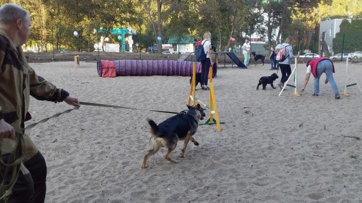 В Самаре открыли новую площадку для выгула собак
