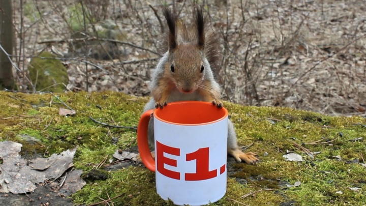 Белочка против совы: выбираем лучшее фото мая на E1.RU