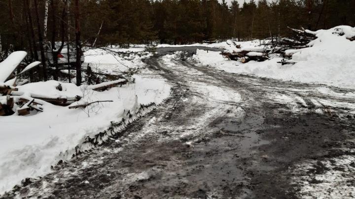 Неизвестные химикаты в дзержинском лесу оказались отходами автомойки. Автоцентр вину признал
