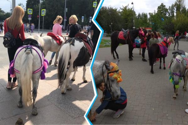 Девушки не только выводят лошадей на улицы города, чтобы заработать на этом, но и часто не убирают за животными