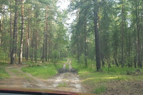 В Зауралье сохраняется4 класс горимости леса по шкале Нестерова
