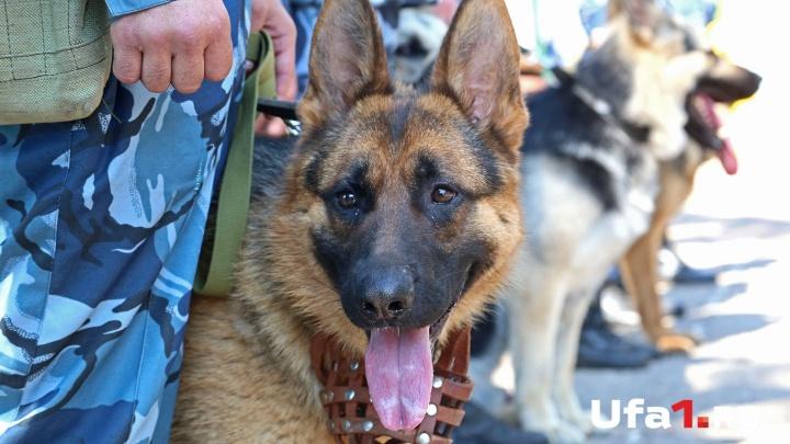 От таких не спрячешься: служебные собаки показали, как ищут наркотики и ловят преступников