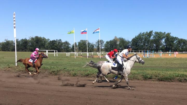 Проспонсируют лошадей: конезаводчикам Самарской области пообещали областные и федеральные субсидии