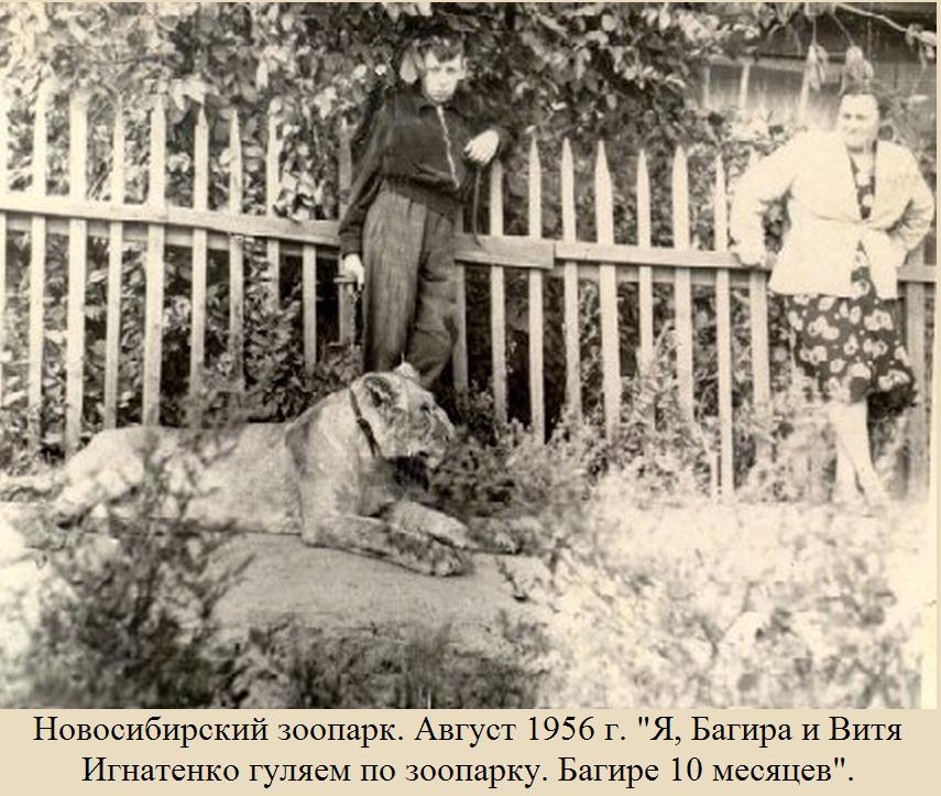 В зоопарке всегда работали юннаты и учёные— когда-то даже выгуливали хищников, словно болонок