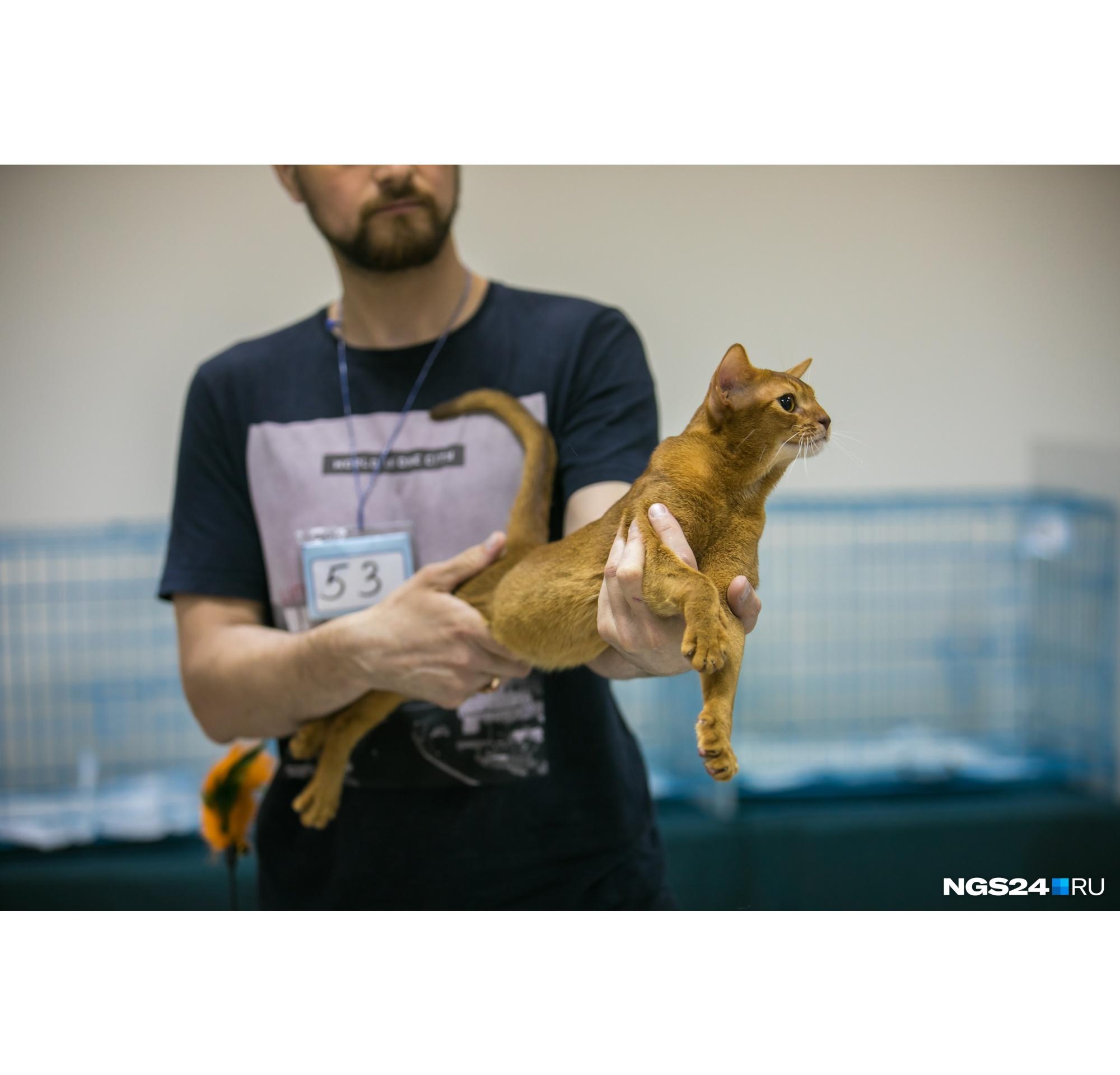 В руках хозяина он постоянно перекатывается как вода. Вам еще нужны доказательства, что коты — это жидкость?