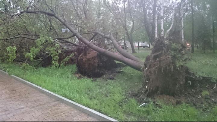 В МЧС выпустили экстренное штормовое предупреждение на выходные