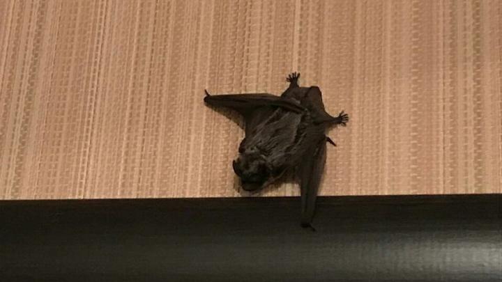 Уфимские спасатели вытащили из линолеума летучую мышь