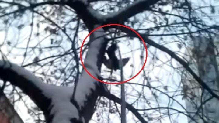 Екатеринбуржец спас голубя, повисшего на дереве вниз головой