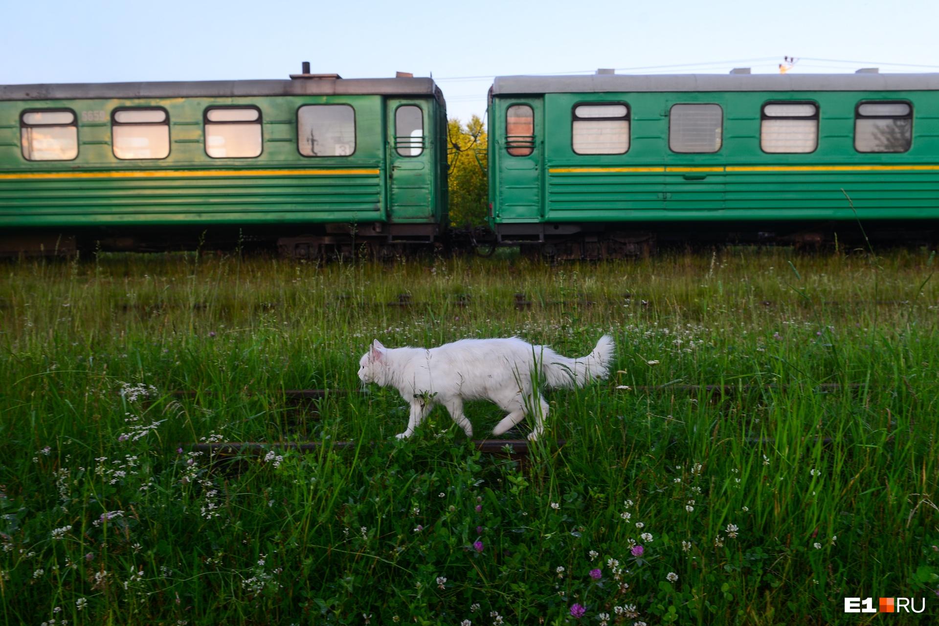 Поезда в поселках иногда встречают всем миром